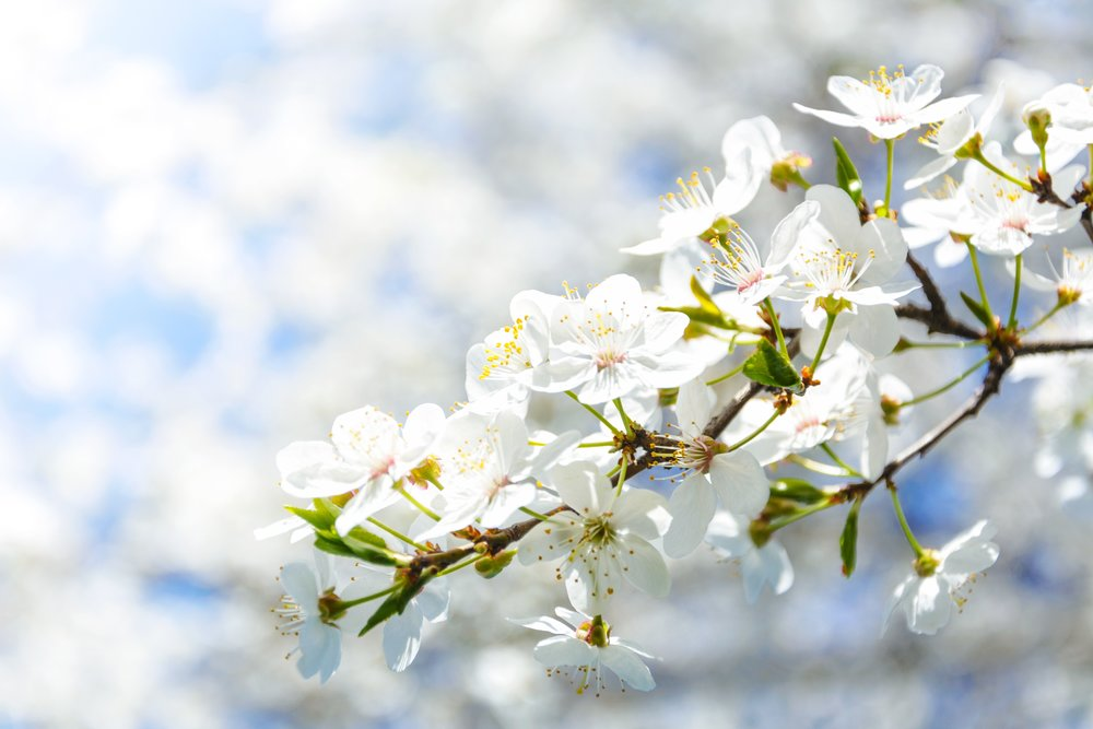 beautiful-blooming-blossom-1009831.jpg