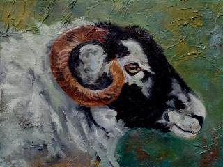 Colin's Sheep