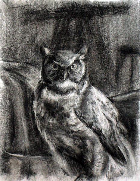Owl Taxidermy