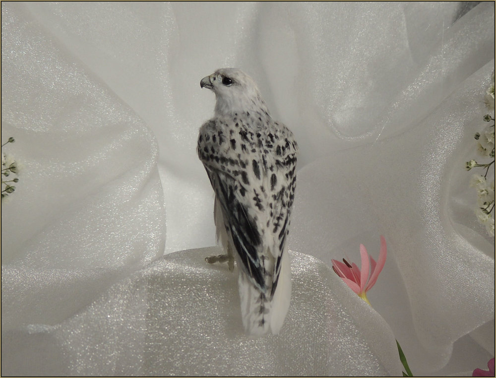A white morph Gyrfalcon custom made into 1.8 scale for a wedding cake topper.    Medium: Polymer clay sculpture, feather plumage Onyx eyes    Dimensions: 7.6 cm (3 inches) in length including the tail. Free standing sculpture.    Year: 2015    To be notified when commissions for Gyrfalcons are are being accepted or are available for purchase in future please request to be added to the    mailing list   .