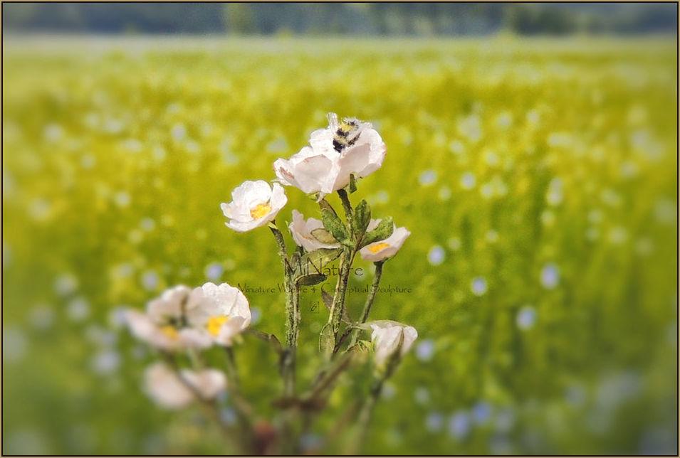 Bumblebee gb3.jpg
