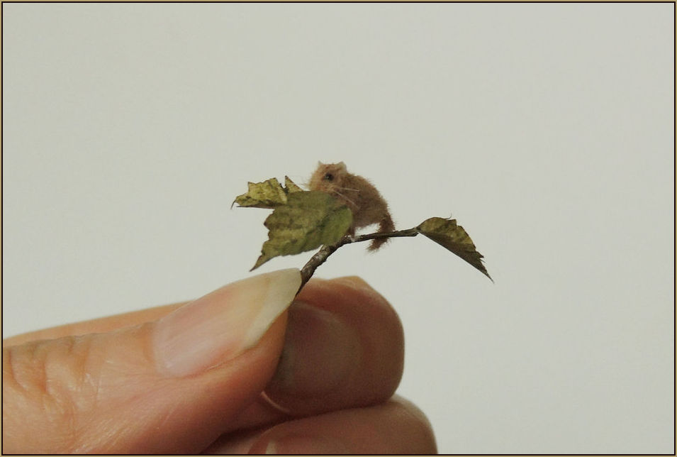 It is believed that the Hazel Dormouse spends at least three quarters of its life sleeping. Author Lewis Carroll portrayed the sleepy nature of the dormouse in his book Alice's Adventures in Wonderland.    Scale: 1:12th    Medium: Polymer clay, synthetic fibre coat and glass eyes.    2017    Prices for Hazel dormice start from £65.00 depending on the pose of the sculpture. Price includes postage within the UK.