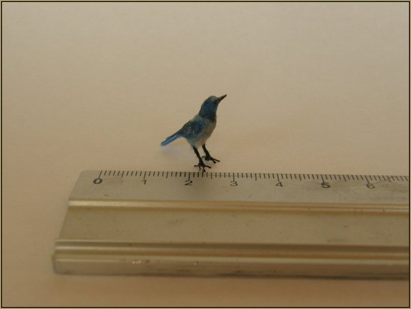 Scale: 1:12th    Medium: Polymer clay, hand painted feather plumage, wire feet and glass eyes.     Measurements: 3.4 cm.    Pictured with a cm ruler