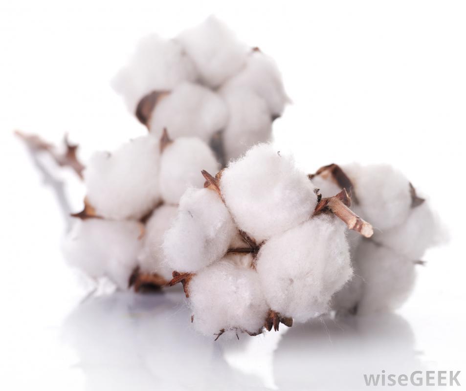cotton-balls-on-a-branch.jpg