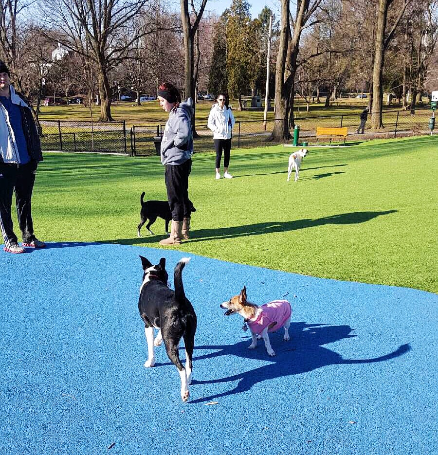 Dog Parks: A Simple Pleasure - Refined Side