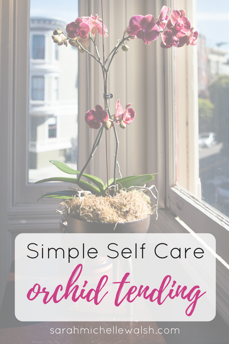 Simple Self Care Orchid Tending