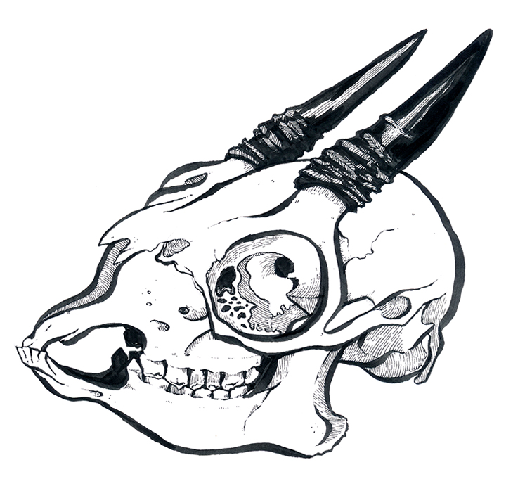 Dik Dik Skull