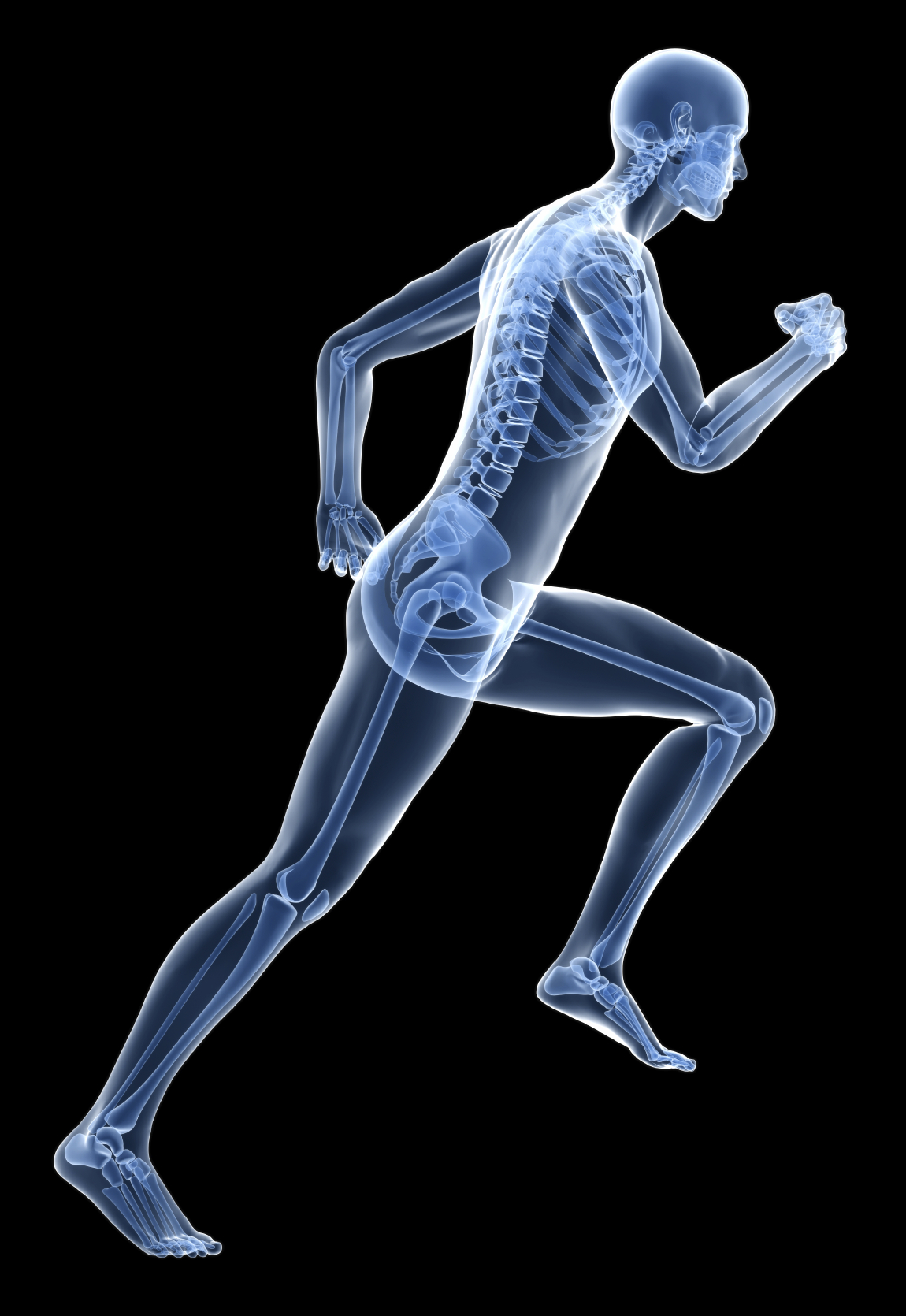 skeletal awareness for better movement — better movement, Skeleton