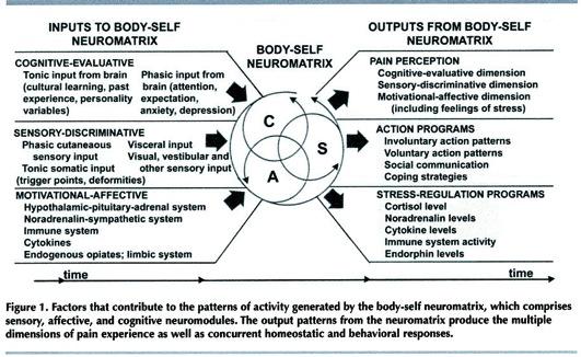 Neuromatrix1