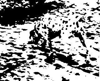 Hidden-Dalmatian.jpg