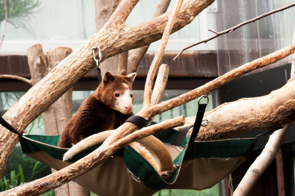 Toronto Zoo 007.jpg