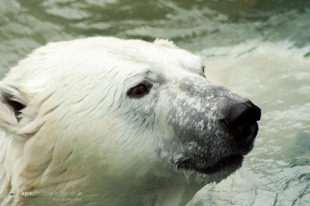 Toronto Zoo 009.jpg
