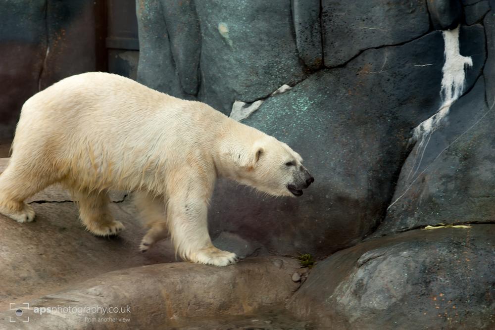 Toronto Zoo 011.jpg