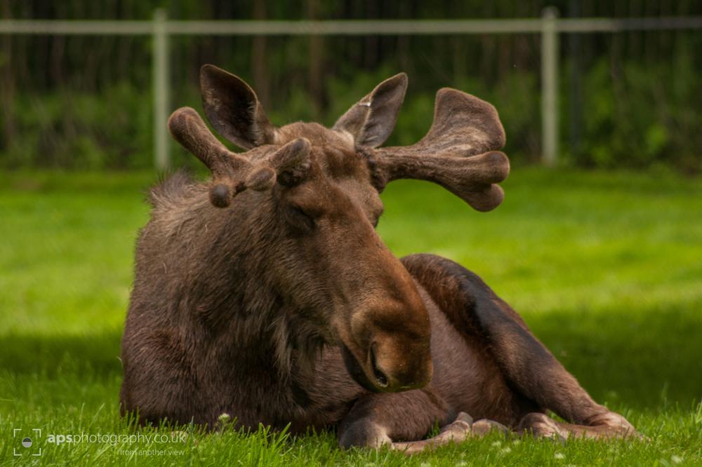 Toronto Zoo 014.jpg