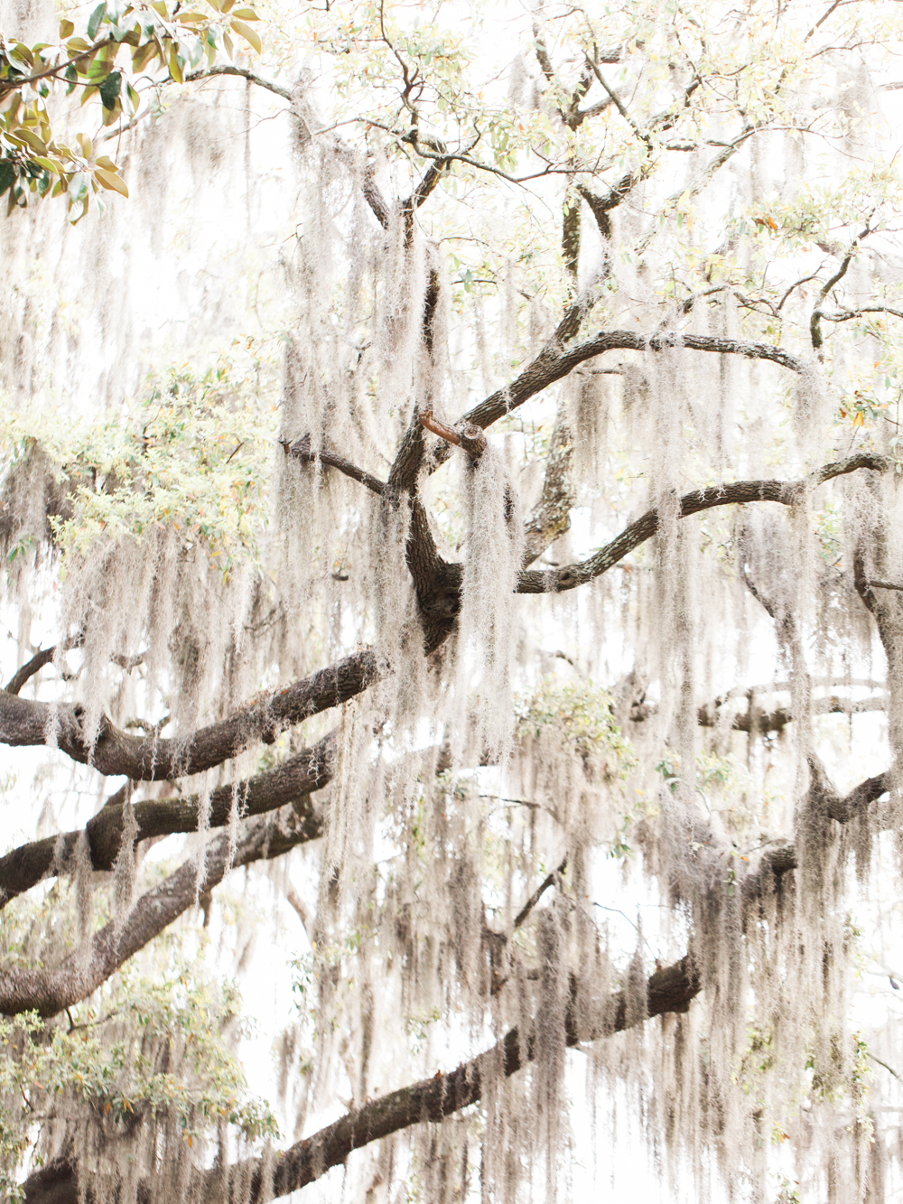 classic-savannah-wedding-the-happy-bloom-savannah-soiree-wormsloe=plantation