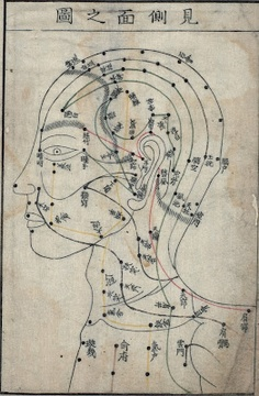 Drawing of acupuncture points on head and neck