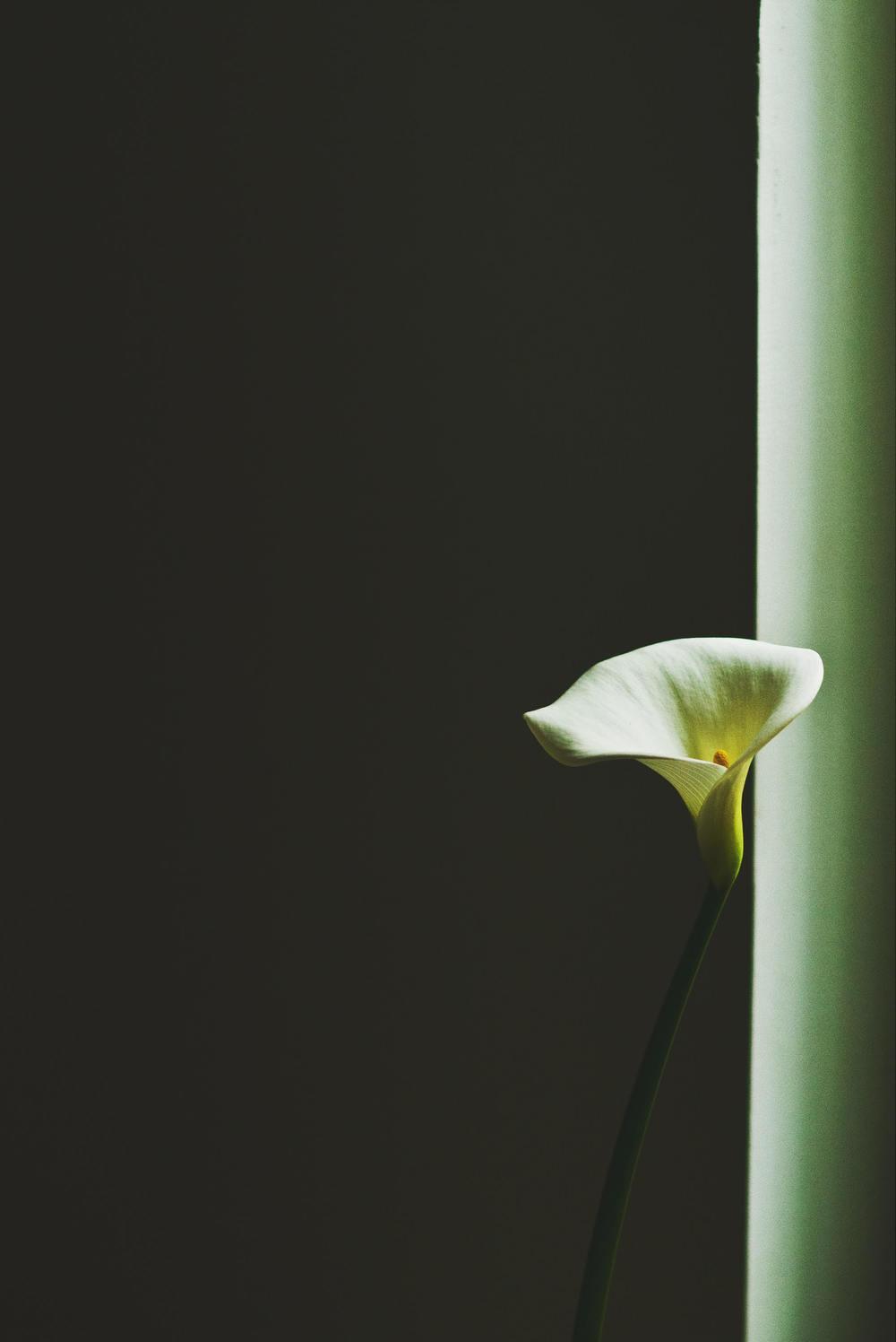 black flower.JPG