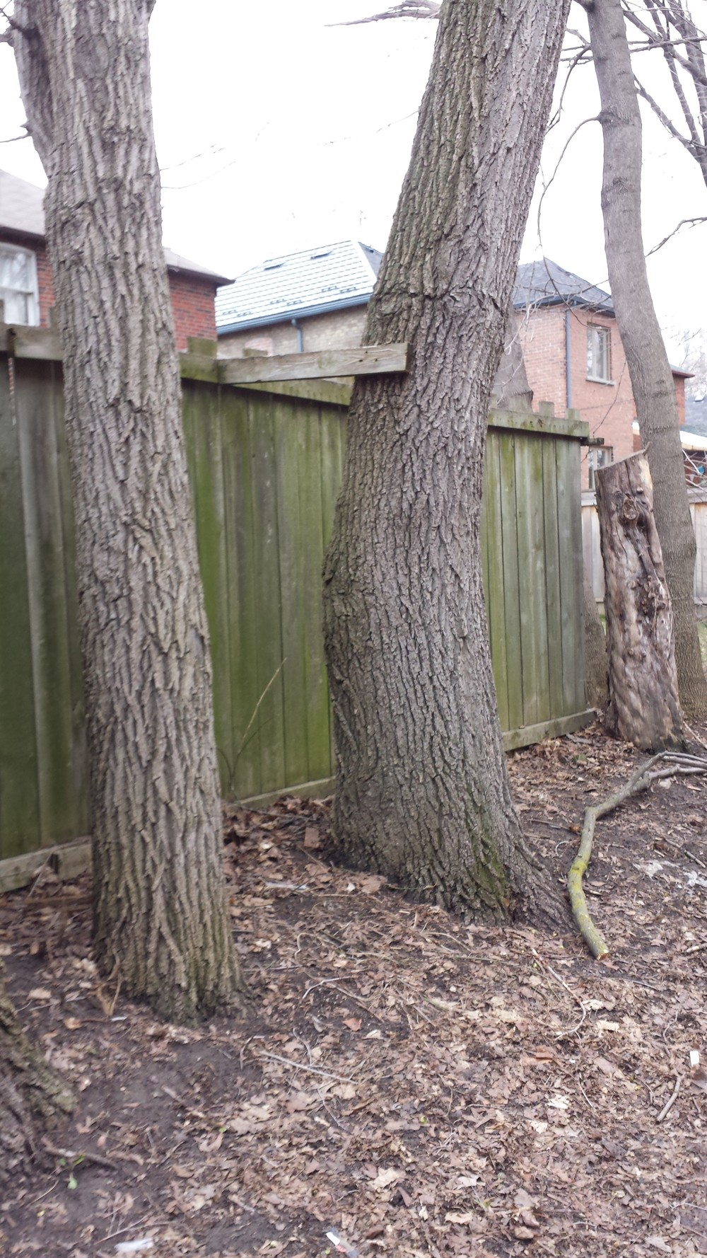 Shown above: A fence attacks a nearby tree. Possibly in retaliation.