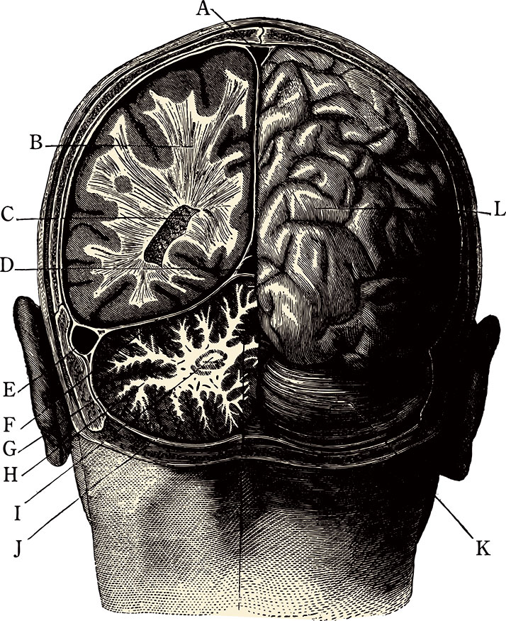 brainManillustration.jpg