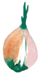 onion_1.png