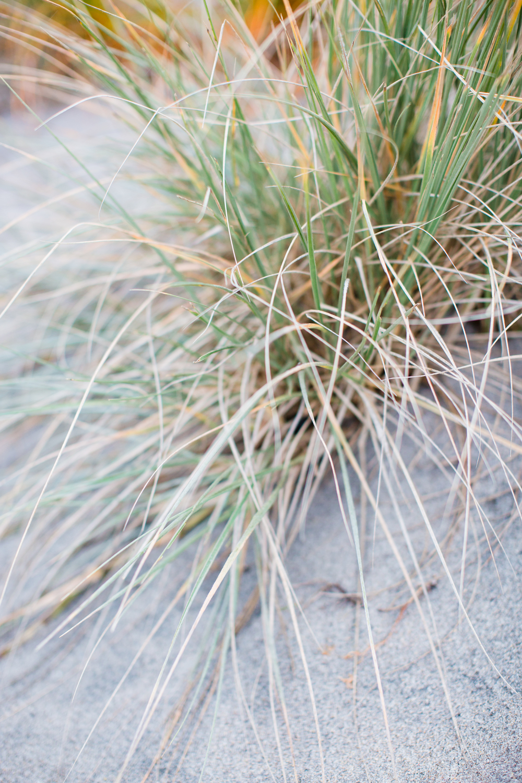 Beach Shoot (90).jpg
