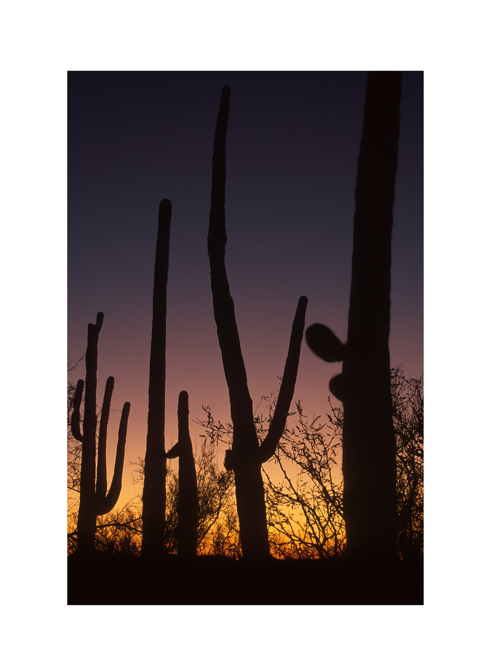 Arizona 06.jpg
