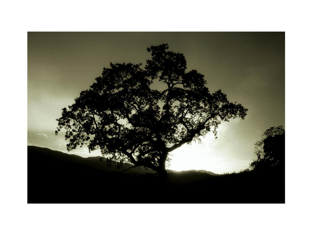 Nature 08.jpg
