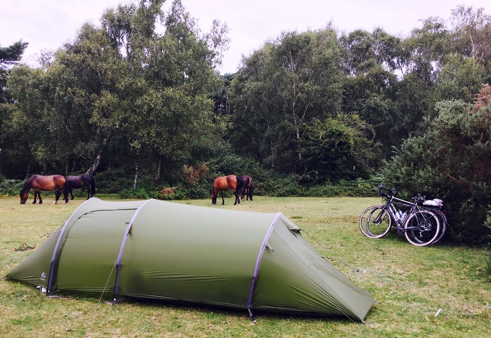 Ponies and cattle nosed around the tent and bikes in the New Forest