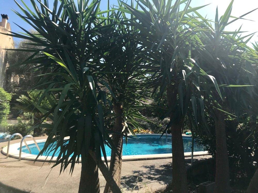 pool palms.jpg