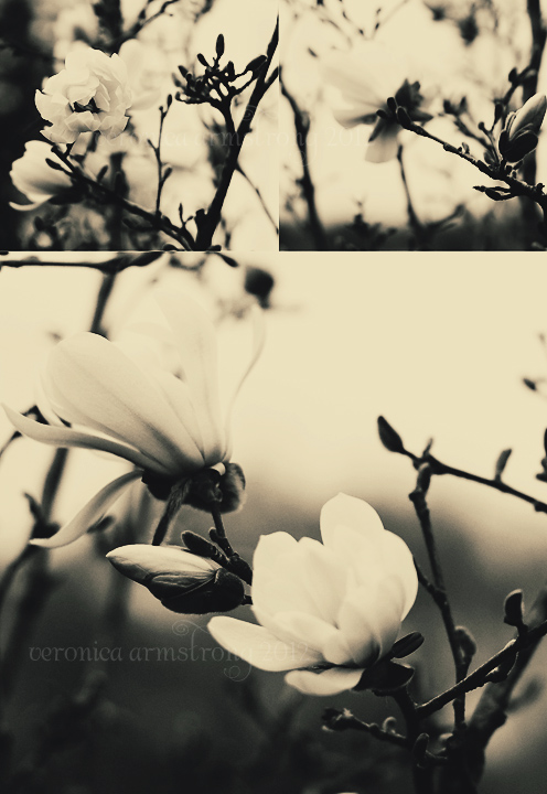 gothic-bloom