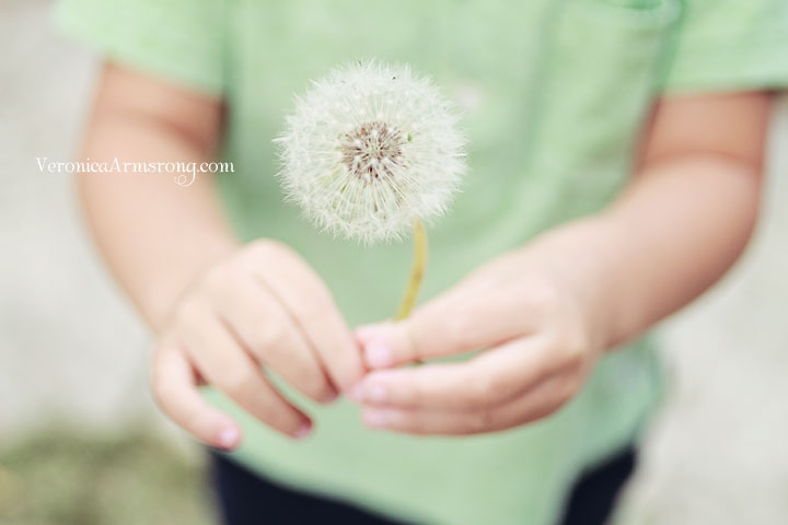 the-last-dandelion-4