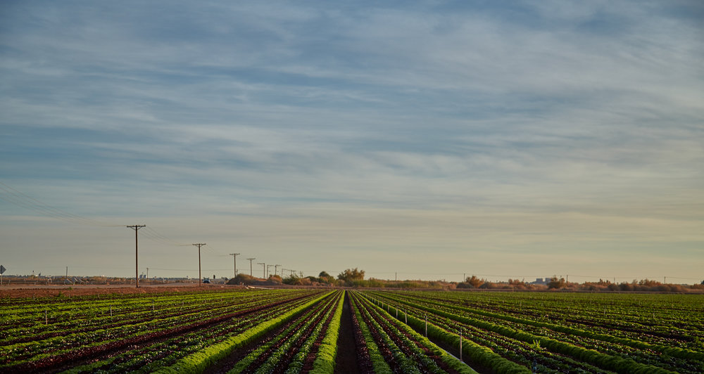 Arizona Farmland - sunset - Phoenix Editorial Photographer - Eatingwell Magazine
