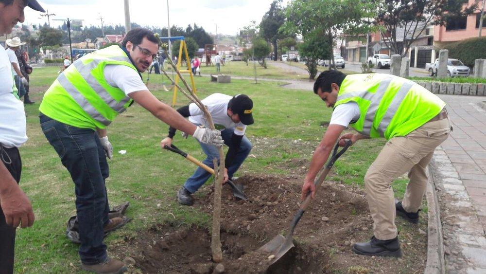 Příchod tramvaje přetváří město i jinak. V rámci náhradní i doprovodné výsadby Cuencu obohatí 1 500 nových stromů a 64 tisíc keřů. Zlepšila se rovněž údržba i úklid řady městských prostor. (foto: Tranvía Cuenca)