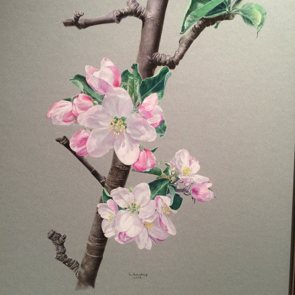 Meena Harding capturing the essence of blossom.