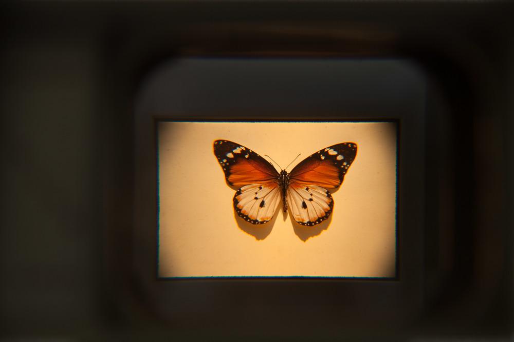 Nigerian Butterflies & Moths