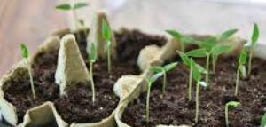 Seedlings love spring!