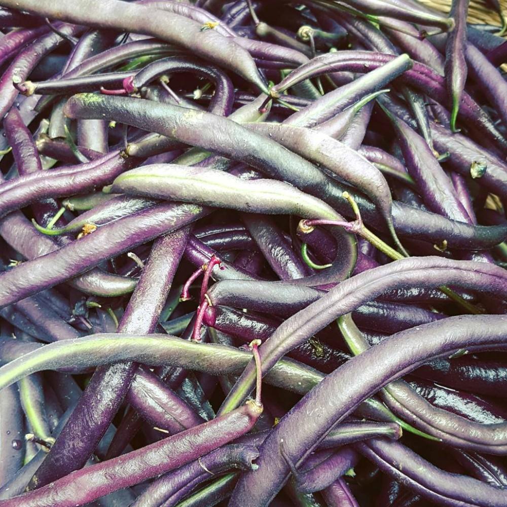 BurraBee Farm Purple Beans.jpg