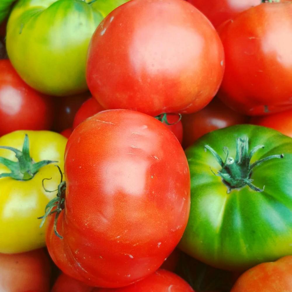 BurraBee Farm Tomatoes.jpg