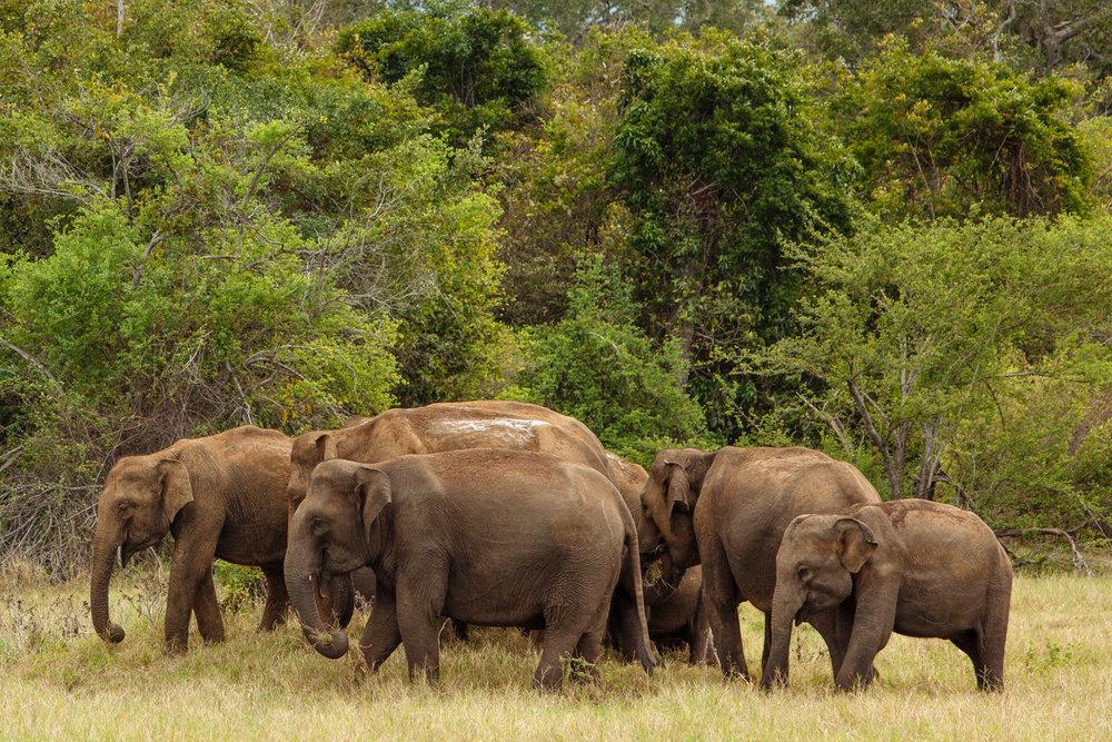 Sri Lanka - Tim Grey-77.jpg