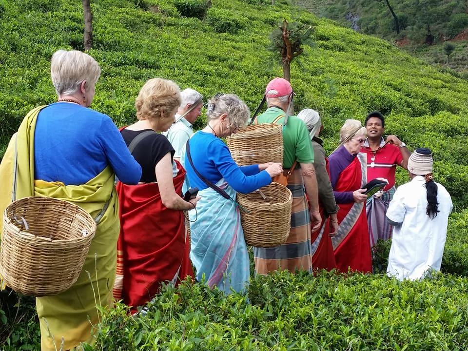 tea-plucking.jpg