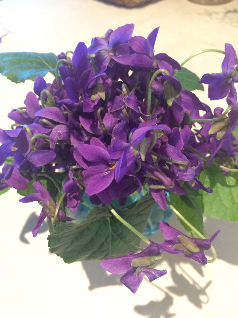Violets .... a favourite to pop into the top of a bouquet.