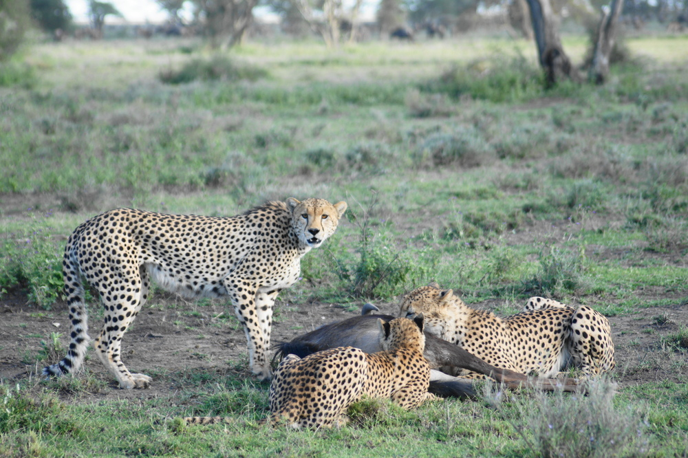 NORTH TO SOUTH TANZANIA   Serengeti to Wild Ruaha in the South.