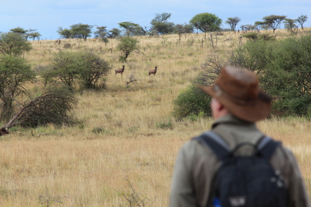 SERENGETI WALKING TOUR  Get your heart pumping + hair raising.