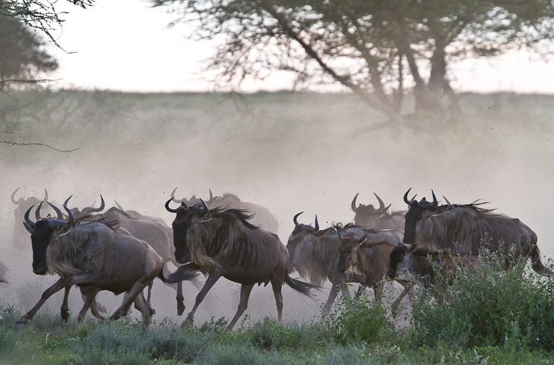 KENYA'S MARA TO SERENGETI   Follow the Wildebeest Migration.
