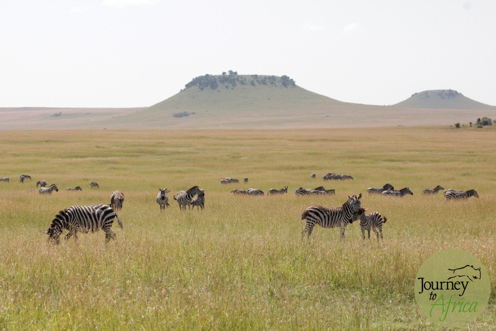The table hill of Northern Serengeti. So many other hill dotted in the North.