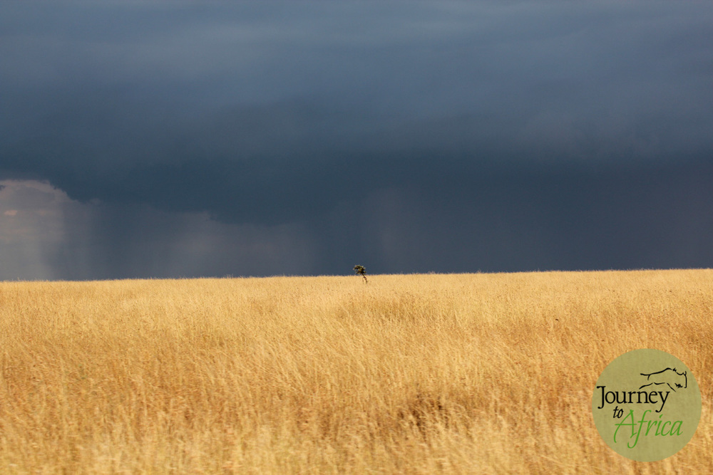 The open plains of Central Serengeti heading towards Dunia Camp near the Moru Kopjes