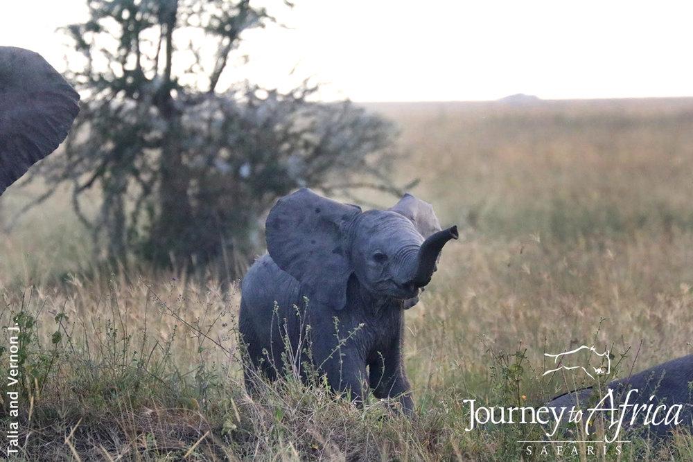 mourning baby elephant