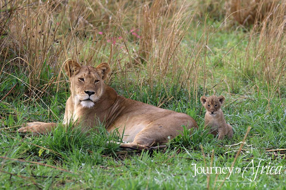 lion_cub_blog.jpg