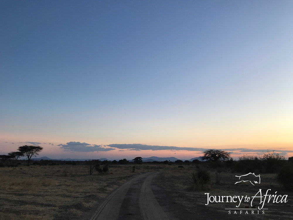 Evening game drive in Ruaha. You can't help but appreciate the vastness, the silence, the unknown.