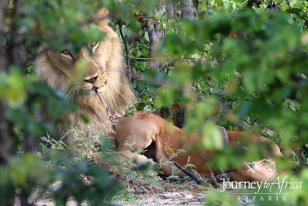 We were so close - we saw the male lion eating a whole impala - nature!